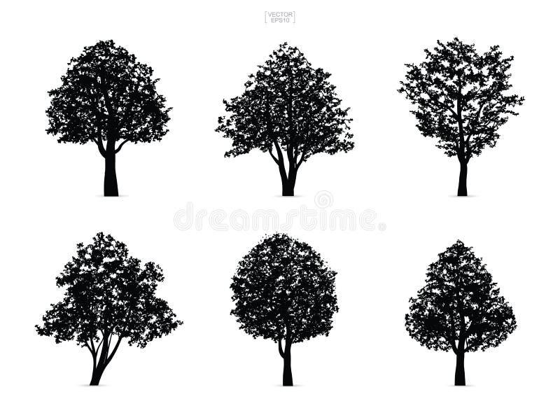 Set drzewne sylwetki odizolowywać na białym tle royalty ilustracja
