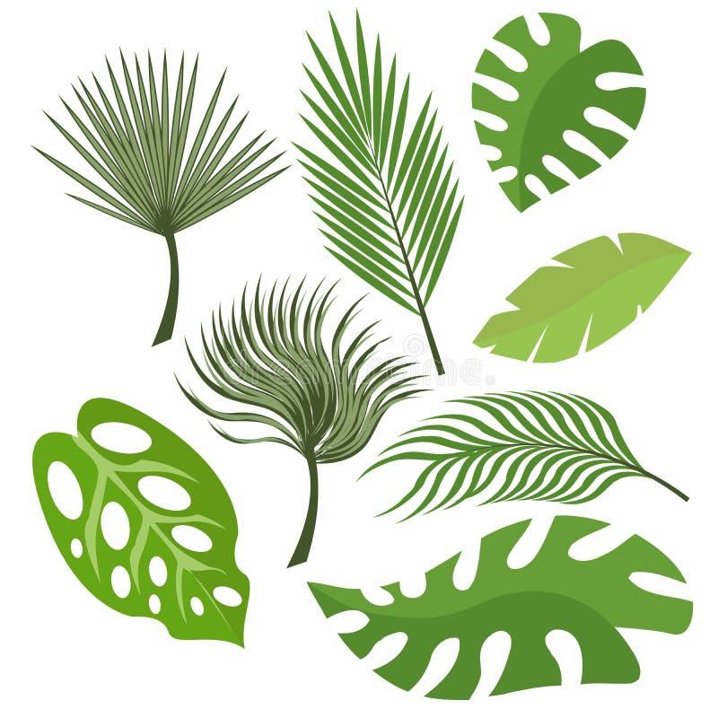 Set egzot opuszcza od drzewek palmowych lub tropikalnych drzew Wektor, ilustracja w mieszkanie stylu odizolowywającym na białym t royalty ilustracja