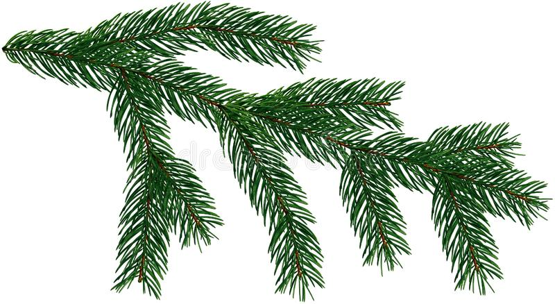 Large Fir Tree branch Christmas Tree is isolated on a white and transparent background add PNG file. stock image