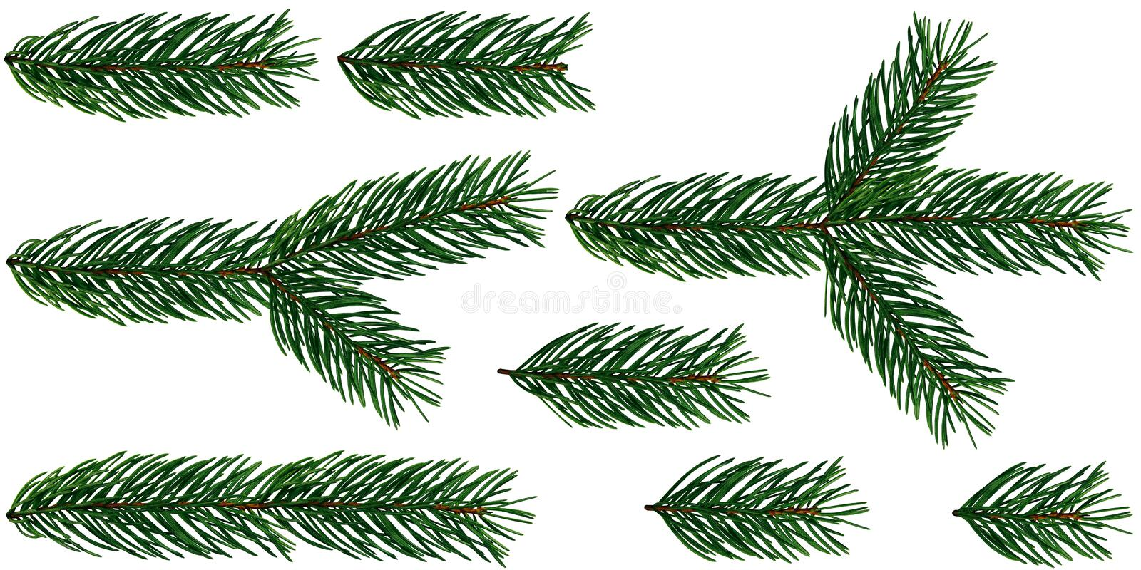 A set of 8 elements of Fir Tree branches Christmas Tree is isolated on a white and transparent background add PNG file.  Happy Christmas and Happy New Year stock photography