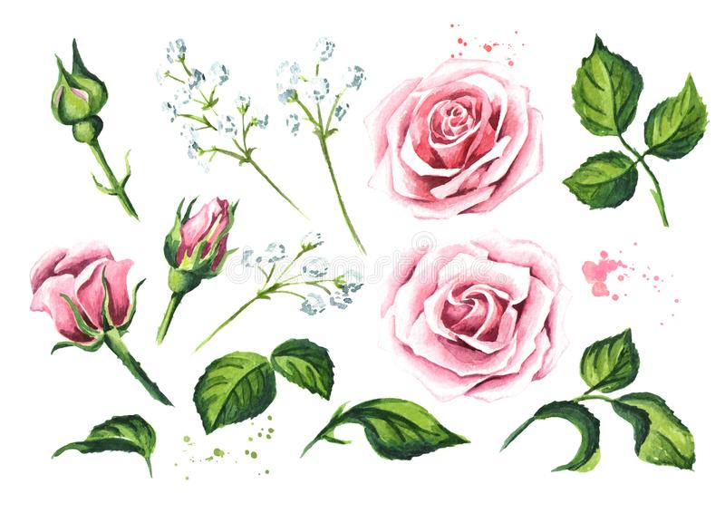 Set of elements of pink rose flower. Watercolor hand drawn illustration, isolated on white background. vector illustration
