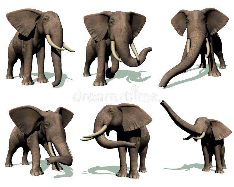Set of elephants vector illustration