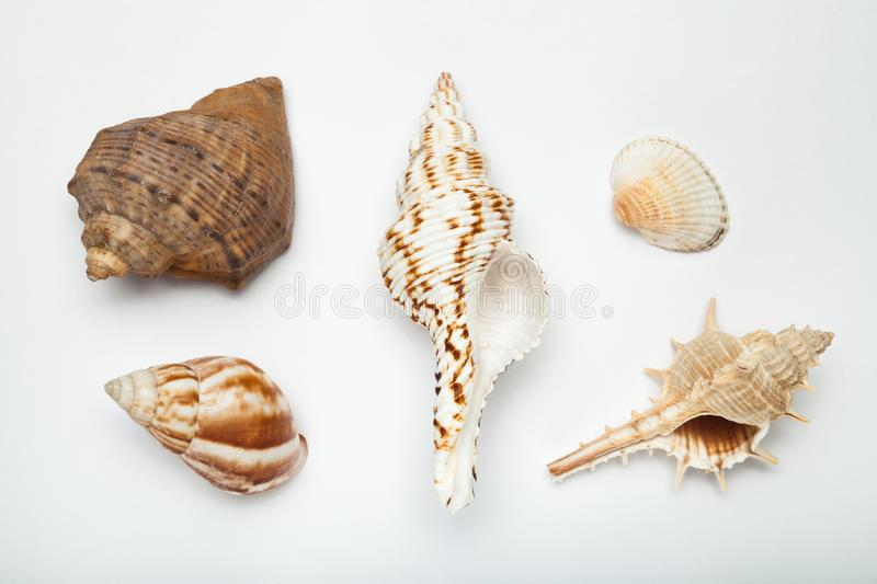 Set of exotic shells on a white background royalty free stock photography