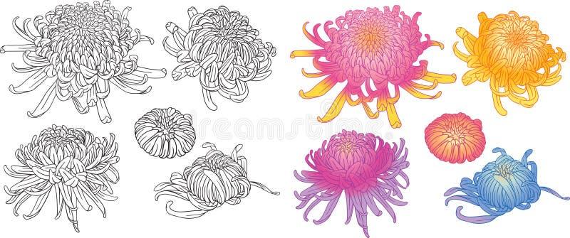 set för blomma för blomningchrysanthemum färgrik royaltyfri illustrationer