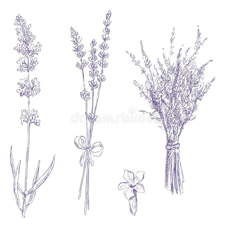 set för teckningslavendelblyertspenna stock illustrationer