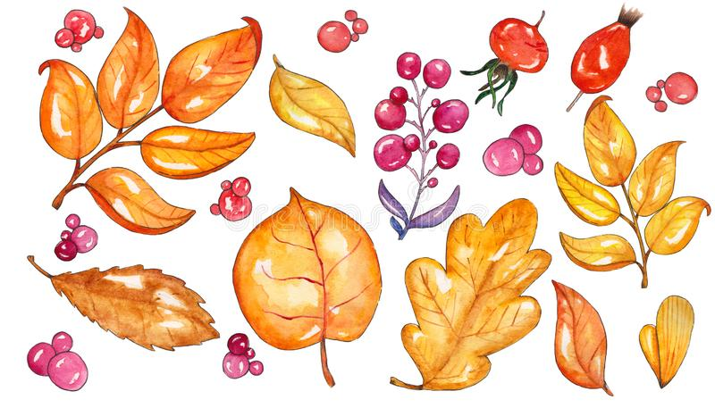 Set of fall leaves, gold leaves and berries. Autumn natural background, watercolor illustration, isolated on white background royalty free illustration