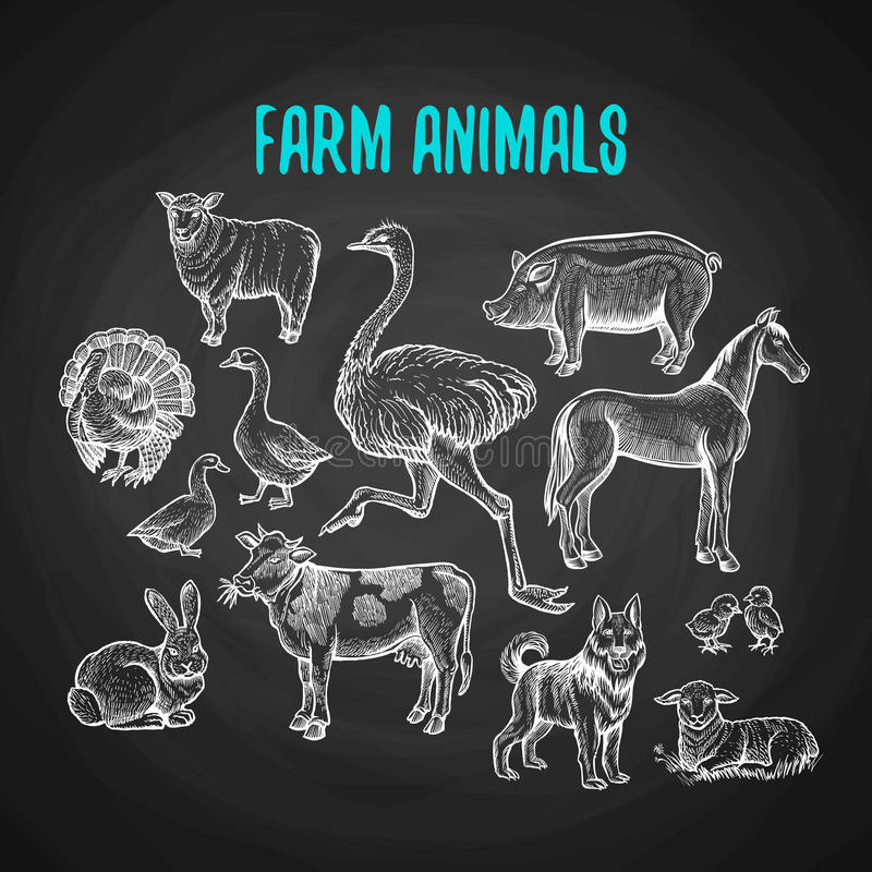Set of farm animals in chalk style on blackboard royalty free illustration