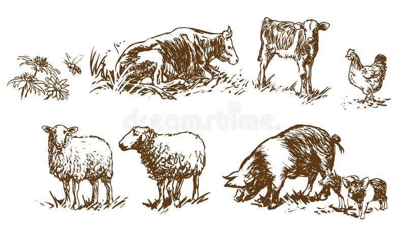 Set of farm animals - hand drawn illustrations royalty free illustration