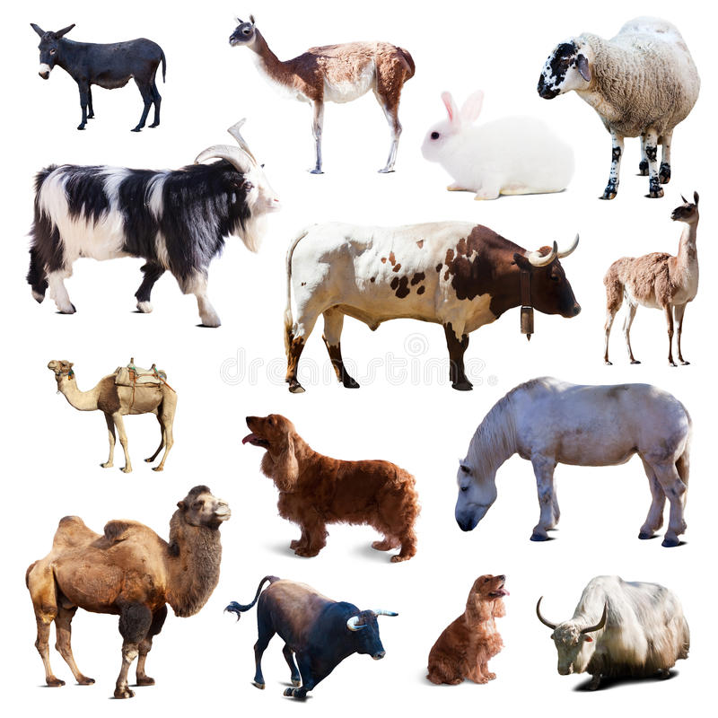 Set of farm animals. Isolated with shade stock images