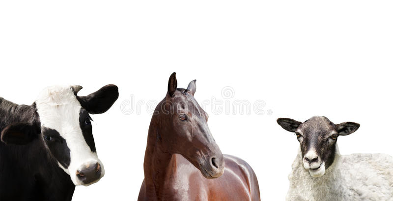 Set of farm animals stock image