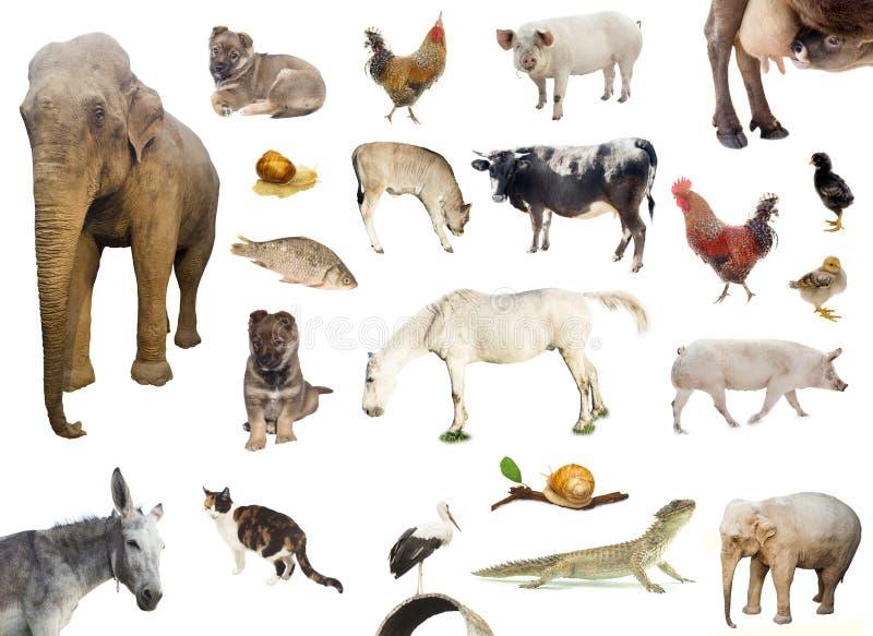 Set of farm and wild animals stock image