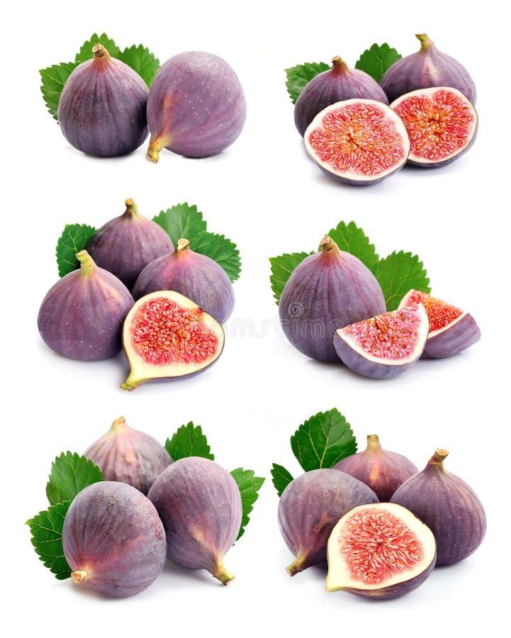 Set fig owoc obrazy royalty free