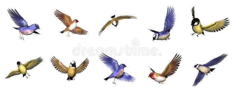 Set finch ptaki - 3D odpłacają się royalty ilustracja