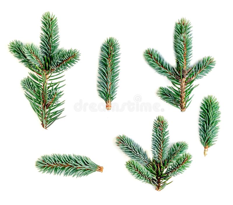 Set of fir branches isolated on white background. Pine branch, c stock photo