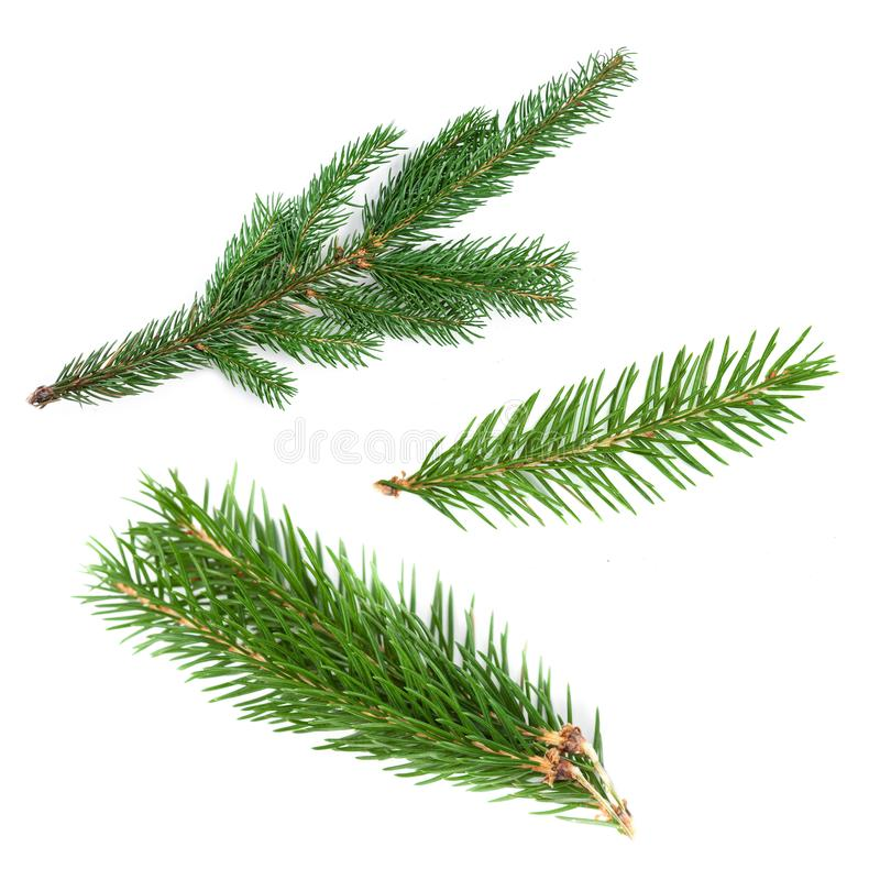 Set of fir branches. Nature Symbol of Christmas and New Year iso. Lated on white background. Green pine, conifer tree stock images