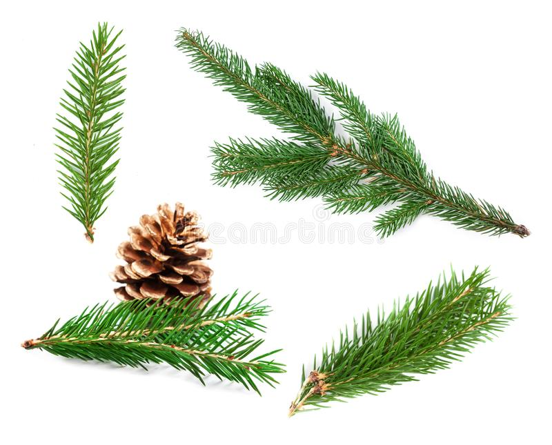 Set of fir branches. Nature Symbol of Christmas and New Year iso. Lated on white background. Green pine, conifer tree royalty free stock photography