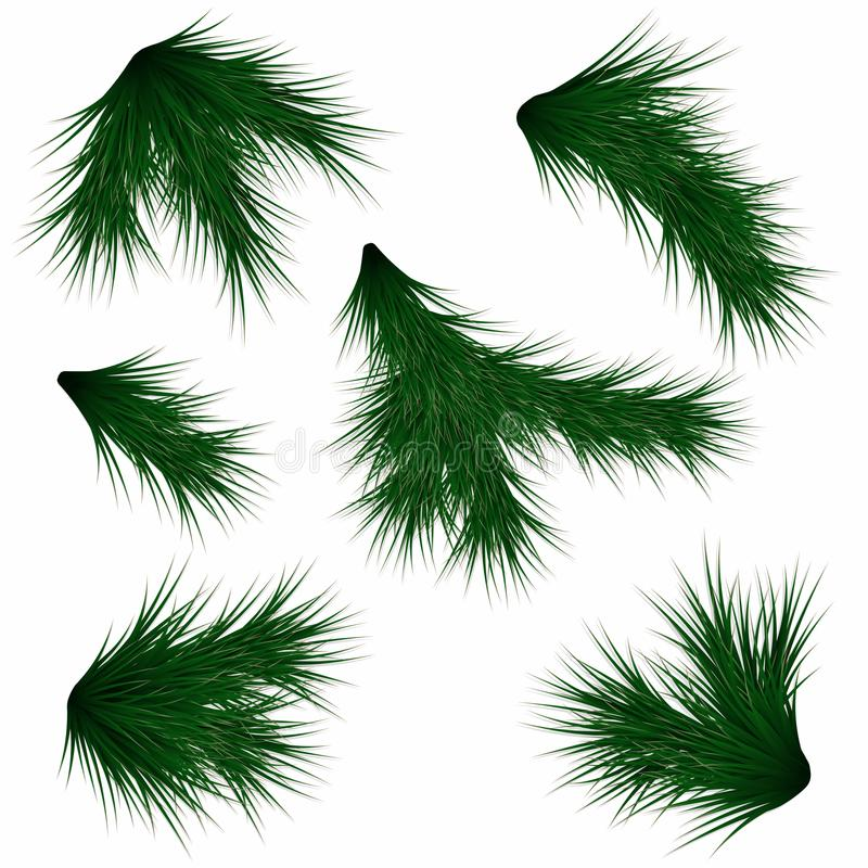 Set of fir branches. Realistic christmas tree branches isolated on white background royalty free illustration