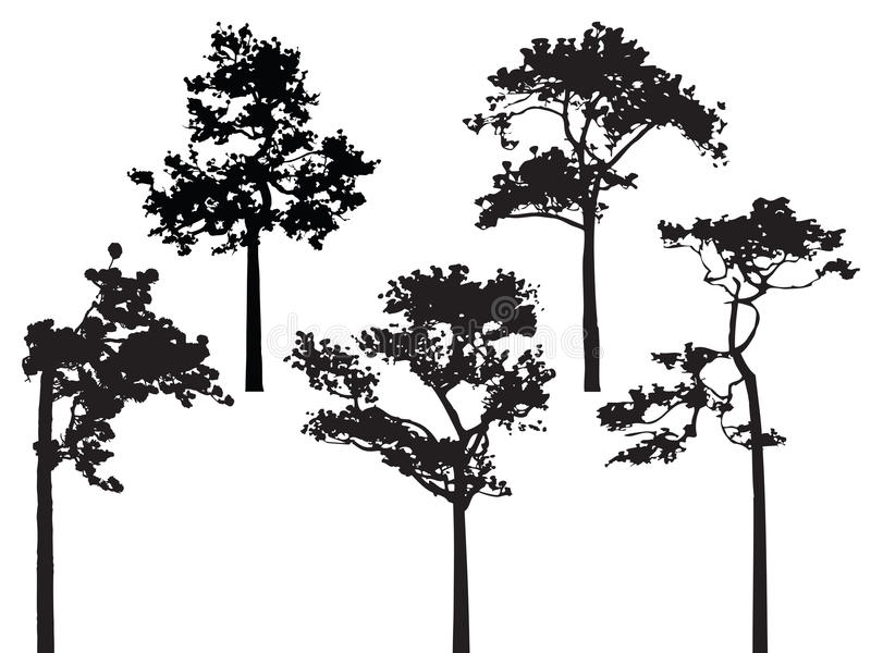 Set of five pine tree silhouette vector vector illustration