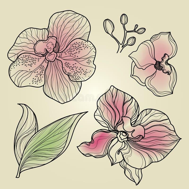 Set of floral orchid design elements royalty free illustration
