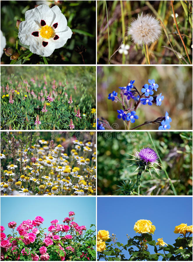 Download Set of flowers stock image. Image of natural, flowers - 16216341