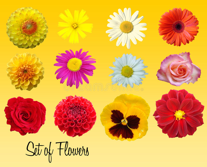 Set of flowers. Colorful set of isolated flowers stock illustration