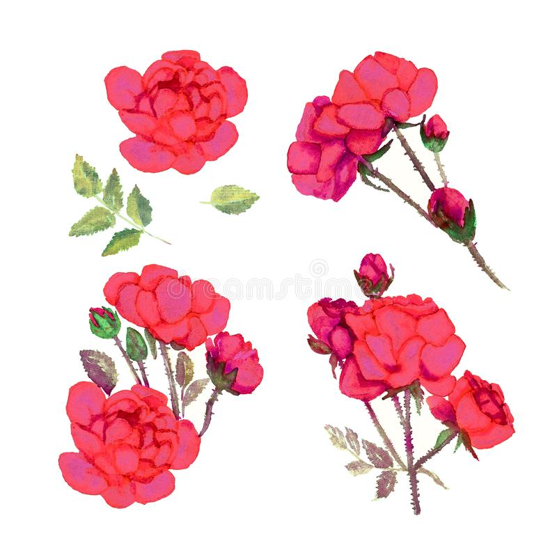 Set flowers of bright red roses, isolated on white background royalty free illustration