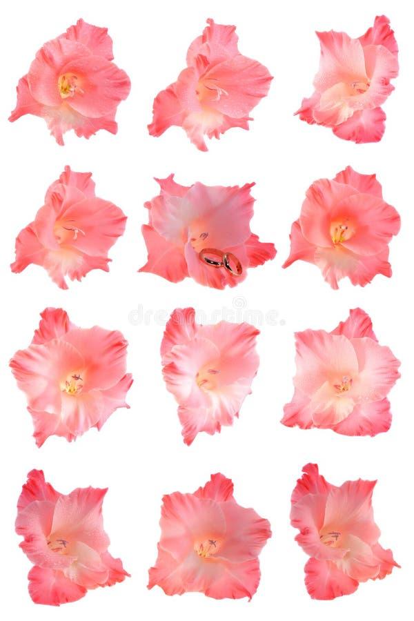 Set flowers isolated stock photo