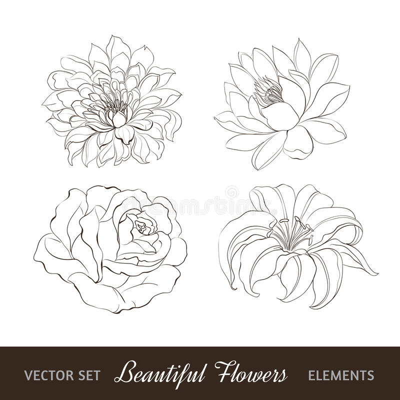 Download Set Of Flowers Isolated Over White. Stock Vector - Image: 30748084