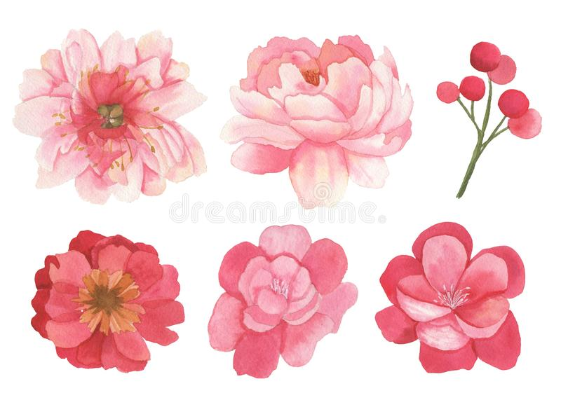 Set of flowers, leaves and branches elements royalty free illustration