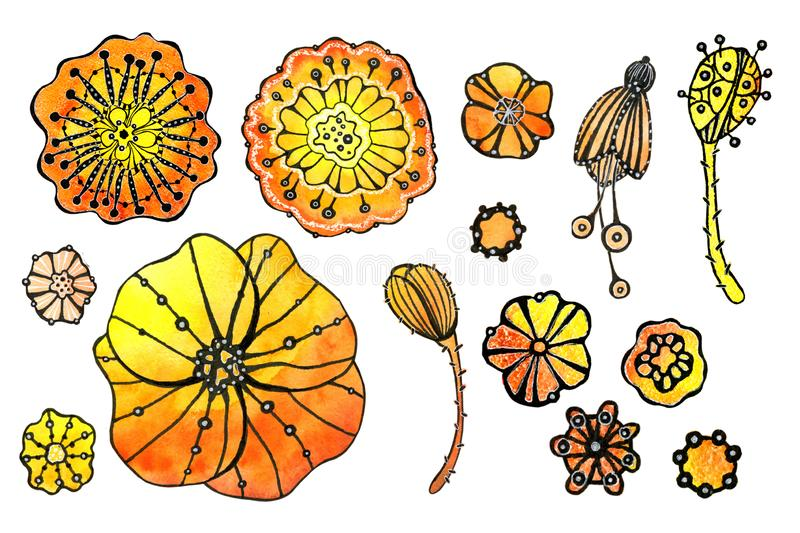 Set of flowers poppy. Watercolor drawing with a contour stroke on a white background, for the design of invitations, cards, vector illustration