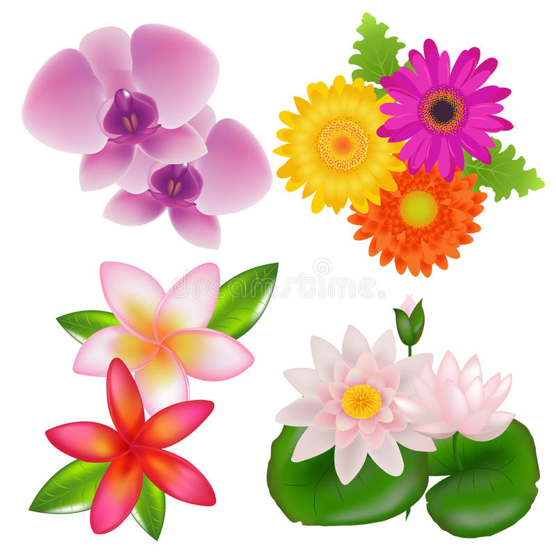Set Of Flowers. Vector royalty free illustration