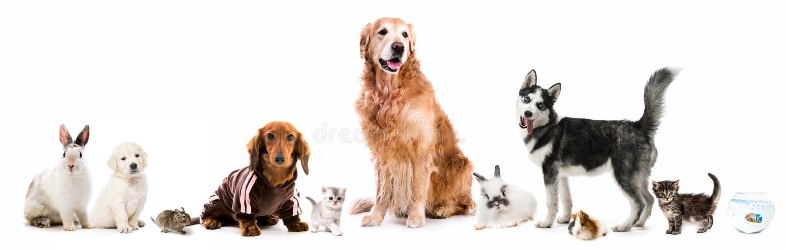 Set of fluffy pets stock image
