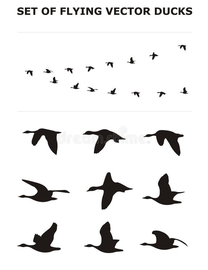 Download Set of flying ducks stock illustration. Image of hunt - 15869771