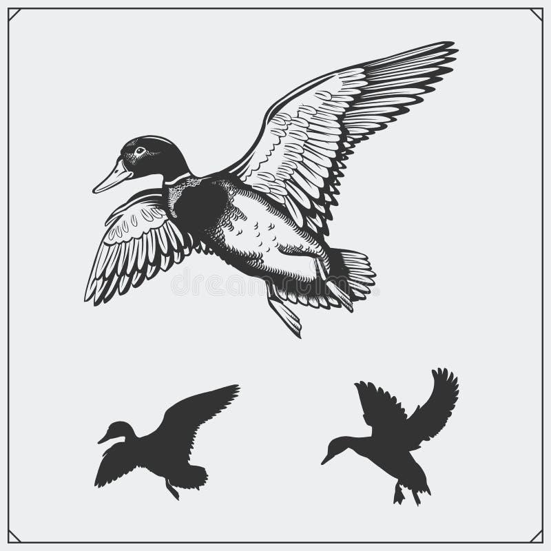 Set of flying wild ducks. stock illustration