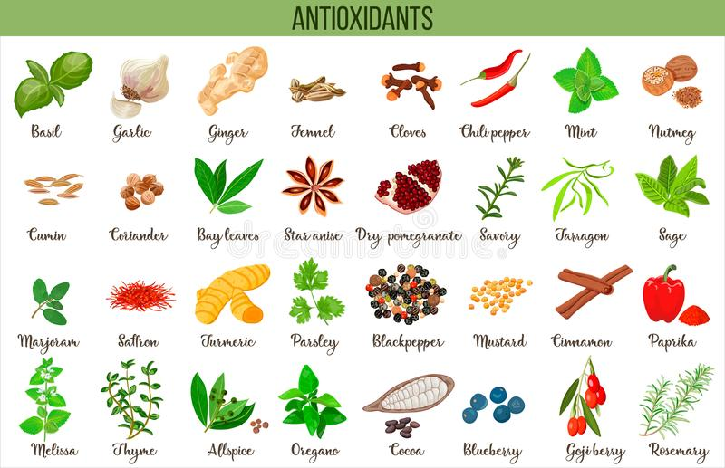 Antioxidant food, herbs and spices. healthy lifestyle. Super food anthocyanins, vector illustration. Set of Food sources natural antioxidants to neutralize free vector illustration