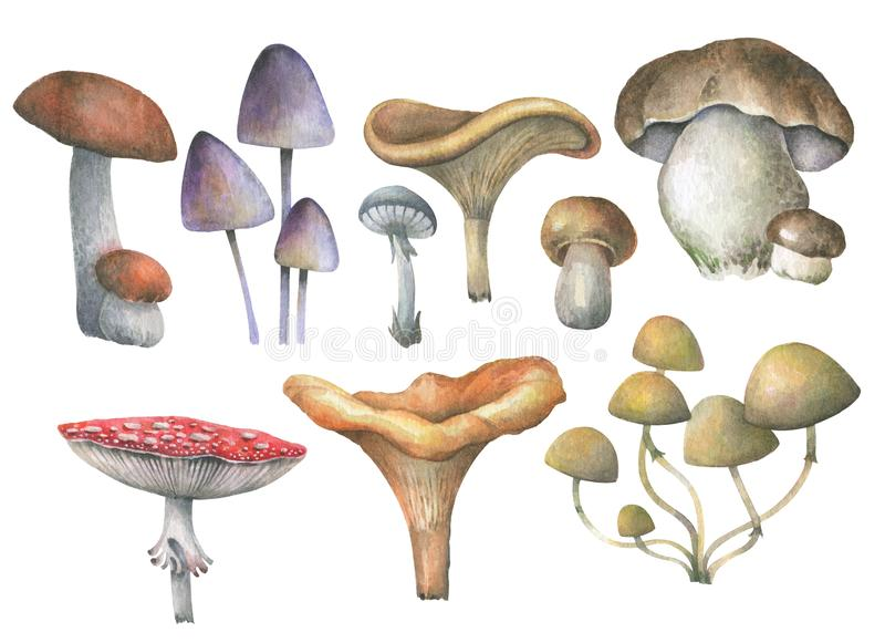 Set of forest mushrooms. Watercolor illustration. stock illustration