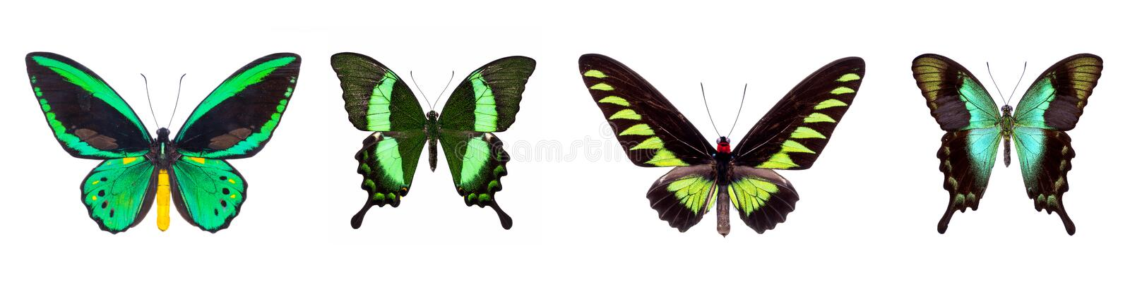 Set of four green beautiful butterflies royalty free stock photo