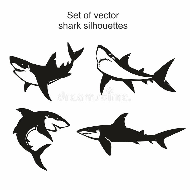 Set of four vector shark silhouettes isolated on white background, symbols, icon, design elements. royalty free illustration