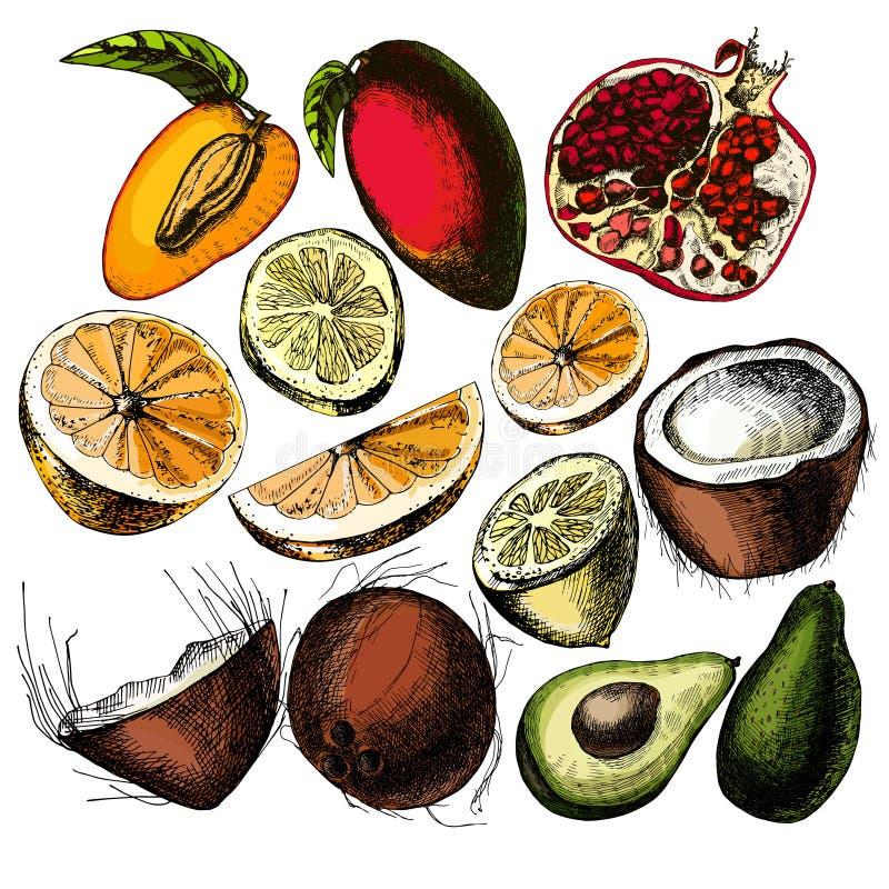 Set Früchte Stilisiert natürliche Elemente stock abbildung