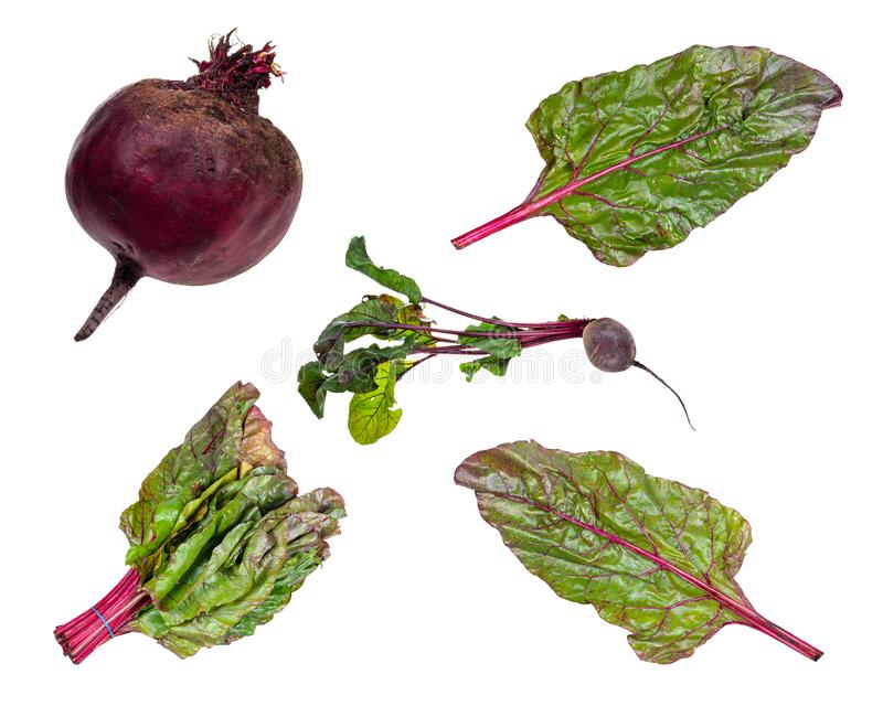 Set of fresh beet vegetables cut out on white royalty free stock photos