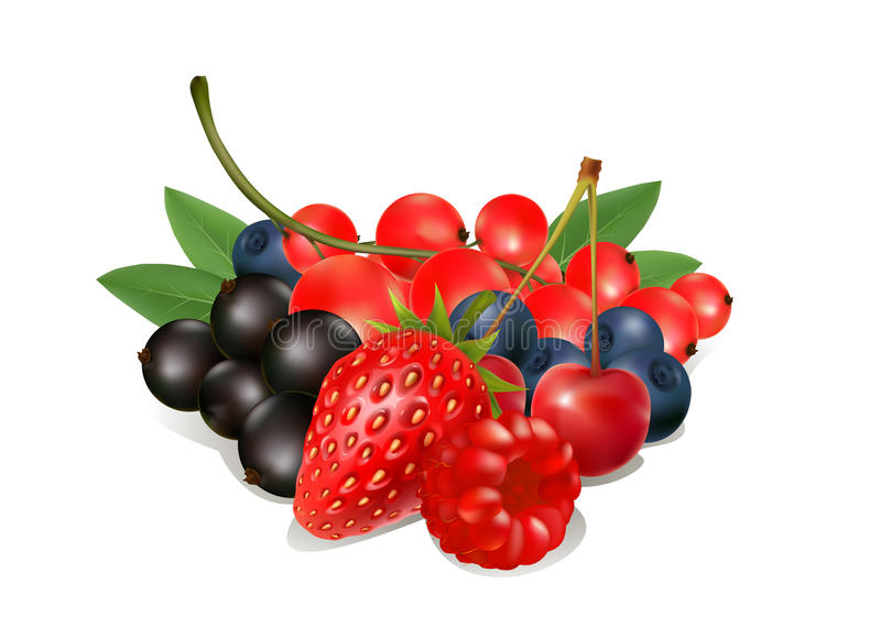 Set fresh berries on a white background royalty free illustration
