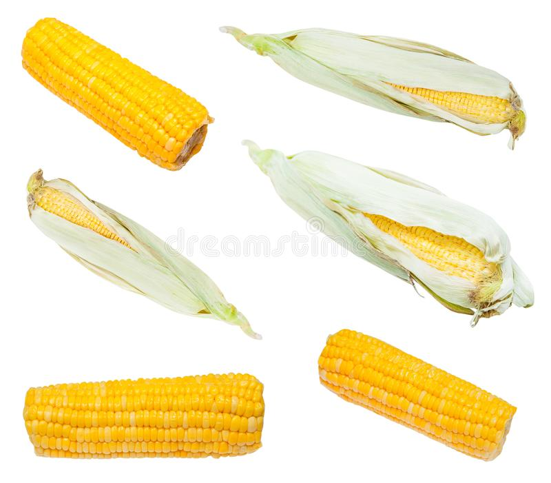 Set from fresh and boiled ears of corn isolated royalty free stock photos