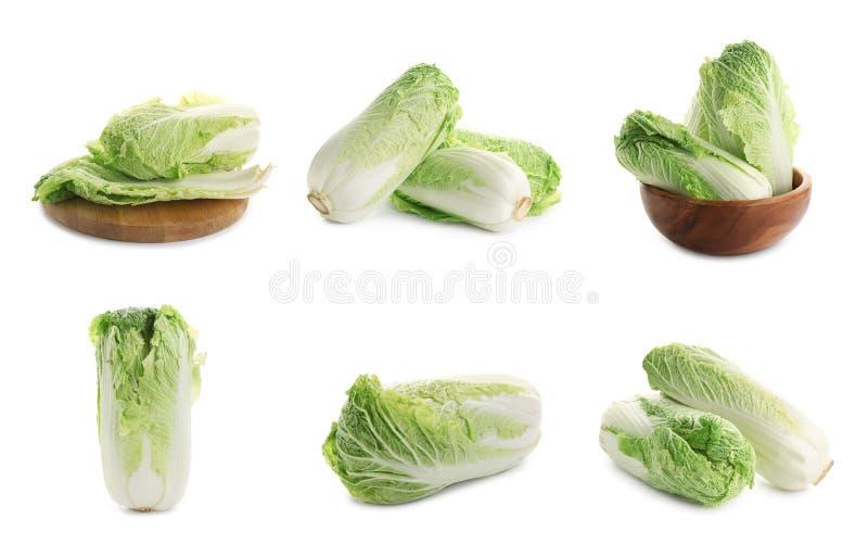 Set of fresh Chinese cabbage on white background royalty free stock photos
