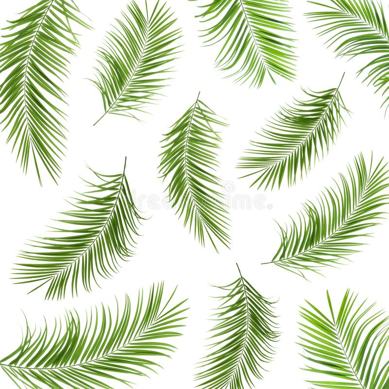 Set with fresh green palm leaves stock illustration