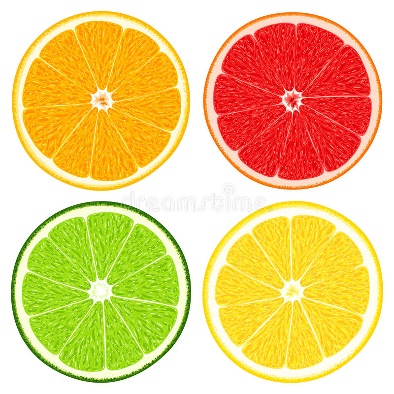 Set of fresh juicy sliced citrus fruits - orange, lemon, lime and grapefruit. Isolated on white background vector illustration