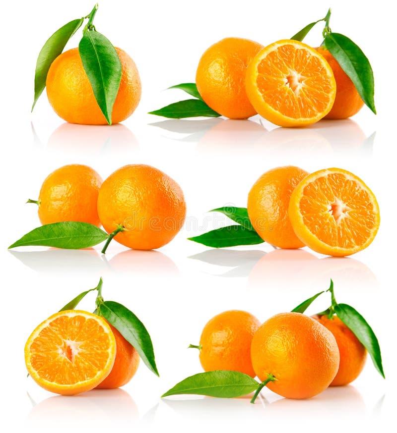 Set of fresh mandarine fruits with cut royalty free stock image