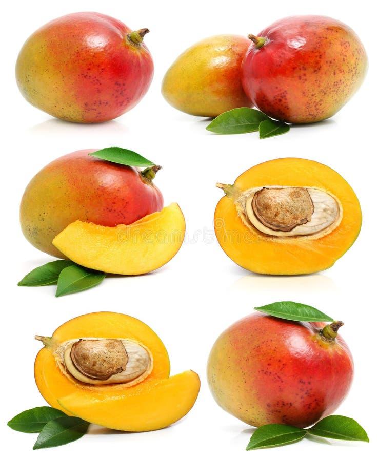 Set of fresh mango fruits isolated on white royalty free stock photo