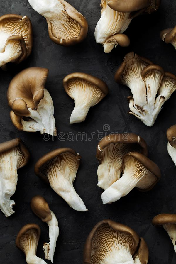 Set of fresh oyster mushroom on gray stone background creative pattern royalty free stock photography