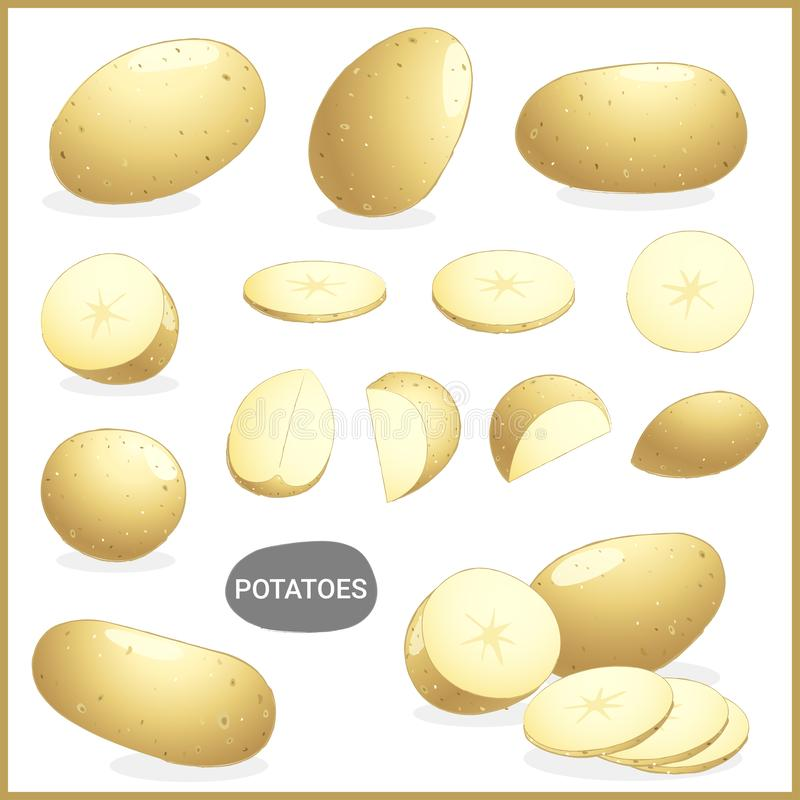 Set of fresh potatoes vegetable with various cuts and styles in vector illustration. Format stock illustration