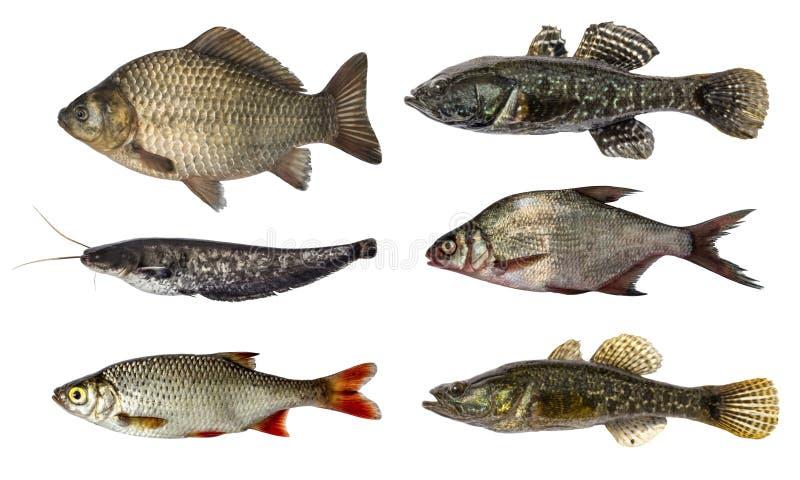 Set fresh raw fish isolated on white background stock photo